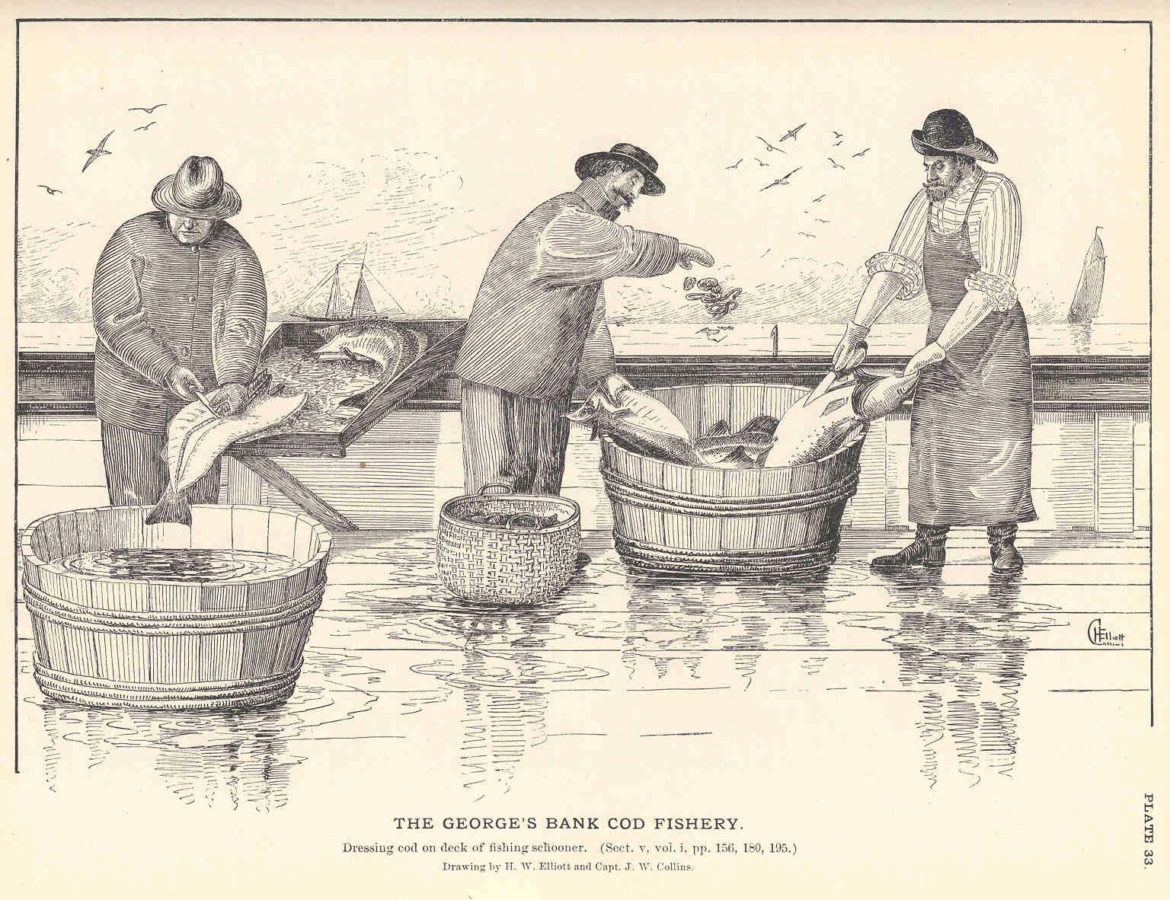 an etching of three men cleaning cod on the deck of a ship